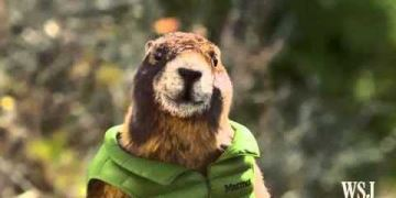 Marmot - Fall In Love With The Outside