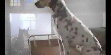 Bud Light - Dalmatian