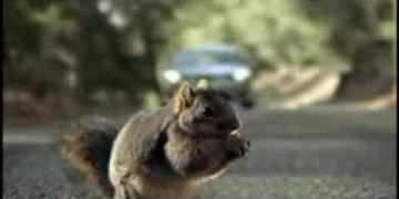Bridgestone - Squirrel
