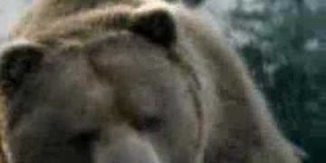 Bud Light - Bear Attack